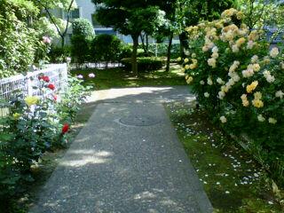 小さな薔薇の園